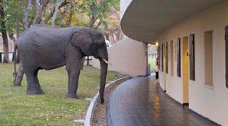 Hwange Safari Lodge